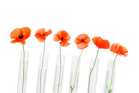Red Poppy in test tube for herbal medicine and essential oil on wooden background. The concept of herbal medine and chimical research.