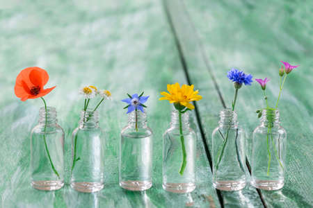 Healing flowers in bottles for herbal medicine on old wooden green craked