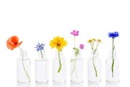 kruidengeneeskunde bloemen in flessen voor kruidengeneeskunde op wit Stockfoto