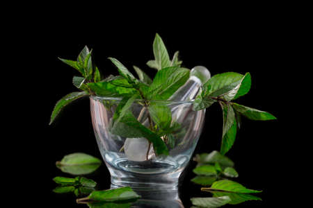 Mortar with peppermint isolated on black background Stock Photo