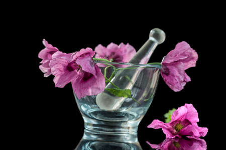 purple poppies , in glass mortar for herba,medicine and essential oil on black background. Stock Photo