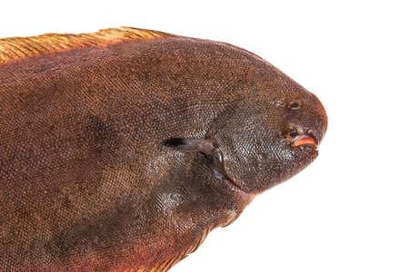 cuerpo entero: solo pez lenguado fresco sobre fondo blanco