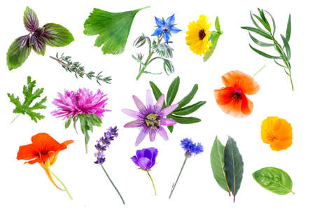 tilo: Collection of fresh medicinal herbs and flowers isolated on white background Foto de archivo
