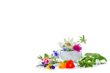 White mortar with herbs and . fresh medicinal plants and Preparing medicinal plants for phytotherapyand health beauty Stock Photo