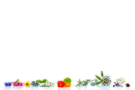 border with herbs and . fresh medicinal plants and Preparing medicinal plants for phytotherapyand health beauty Stock Photo