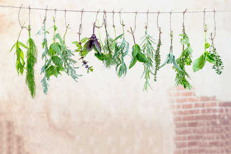 fresh flovouring herbs and eatable flowers hanging on a string, against a old wall