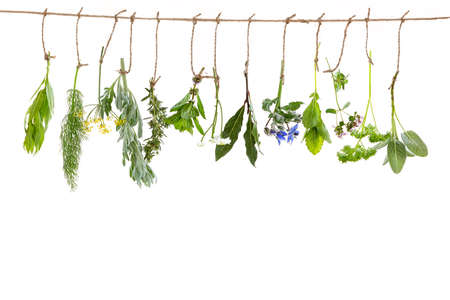 Fresh flavoring and medicinal plants and herbs hanging on a string, on white background
