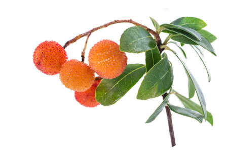 Arbutus branch and very ripe orange fruit on a white background