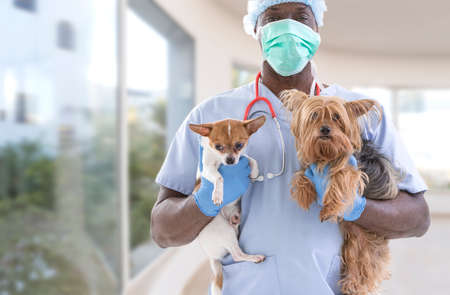 Veterinarian and cute pets on a luxery pet hospital background