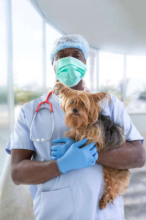 portrait of a surgeryveterinarian and Yorkshire terrier on a luxery pet hospital background Stock Photo