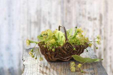 wicker basket with linden flowers on grey wooden table on an old blur wall white background