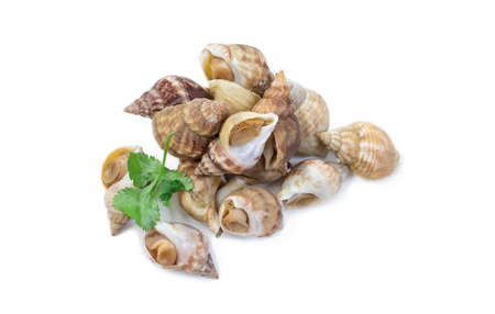 Uncooked fresh common whelks or sea snails isolated on a white studio background.