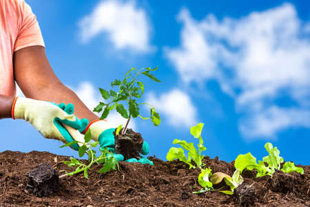 Womans Hands planting of salads in soil over a very beautifull blue sky