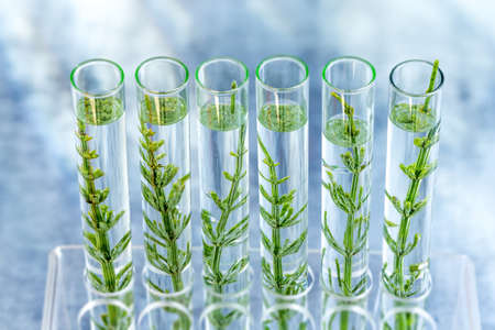 SGMO Concept: samplings of genetically modified plants growing inside test tubes. Stok Fotoğraf - 124986734