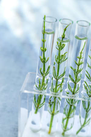 SGMO Concept: samplings of genetically modified plants growing inside test tubes.