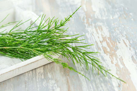Cutting horsetail plants isolated on a white background Stock Photo