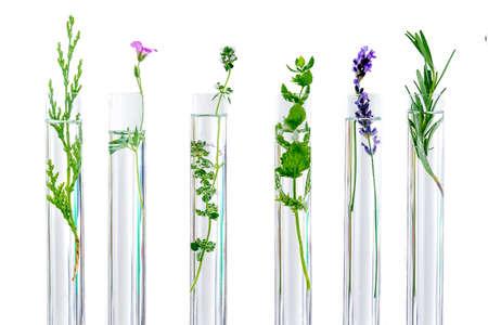 Investigación Concpt sobre plantas, hierbas aromáticas y flores en tubos de ensayo. Foto de archivo