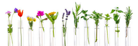 Flowers and plants in test tubes on white. The concept of biological research.