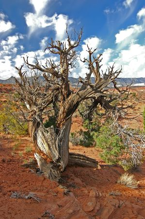 Barren Desert Tree at Escalante NP Stock Photo