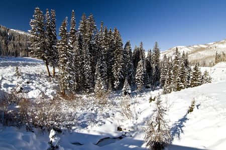 Winter Snow on Stand of Trees Creek Stockfoto