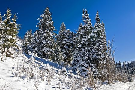Winter Snow on Stand of Trees