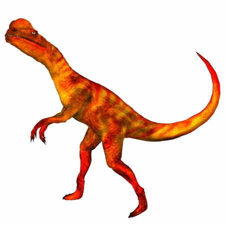 reptilia: Illustration of a Dilophosaurus  dinosaur  isolated on a white background
