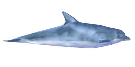 Illustration of a dolphin isolated on a white background illustration