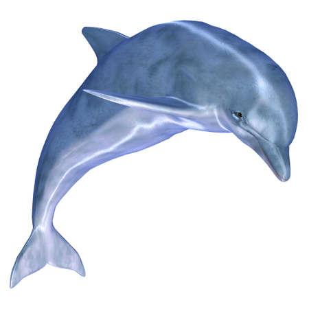 dolphin: Illustratie van een dolfijn die op een witte achtergrond