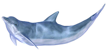 cetacea: Illustration of a dolphin isolated on a white background