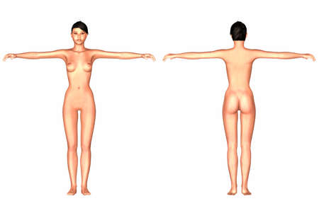 3d nude: Illustration of the human body of an asian female isolated on a white background