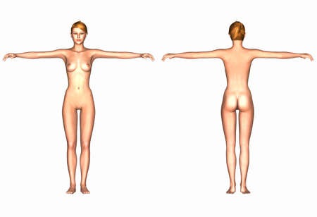 naked female body: Illustration of the human body of a caucasian female isolated on a white background