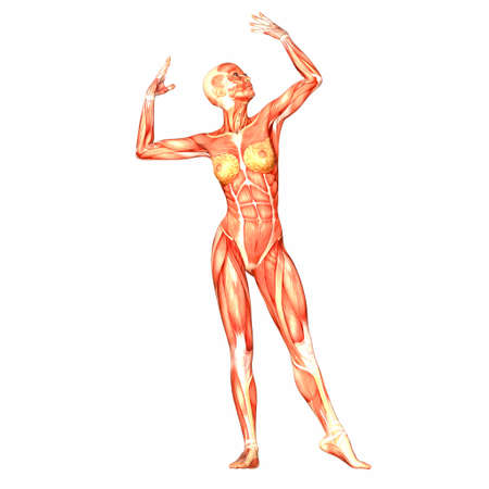 Illustration of the anatomy of the female human body isolated on a white background Stock Illustration - 12741659