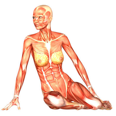 anatomie humaine: Illustration de l'anatomie du corps humain de sexe féminin isolé sur un fond blanc