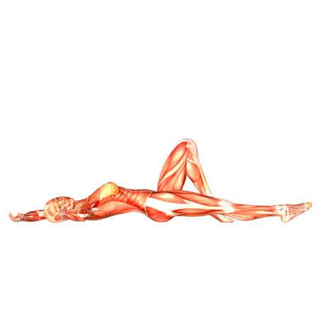 여성 인체의 해부학의 그림 흰색 배경에 고립