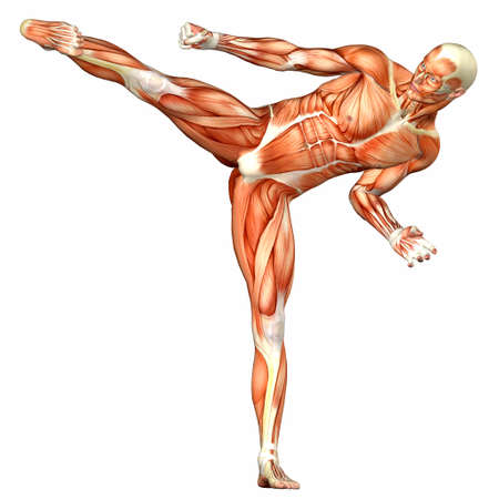 Illustration of the anatomy of the male human body isolated on a white background illustration