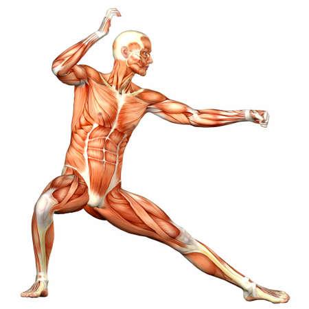 Ilustración de la anatomía del cuerpo humano masculino aislado en un fondo blanco Foto de archivo