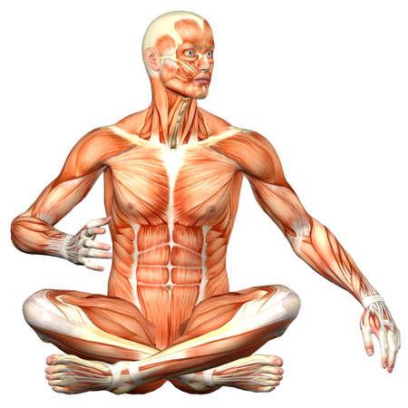 Illustration Der Anatomie Des Männlichen Menschlichen Körpers Auf ...
