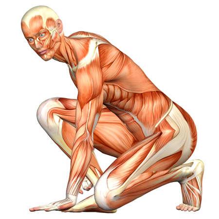 Illustratie van de anatomie van het mannelijk menselijk lichaam geïsoleerd op een witte achtergrond Stockfoto