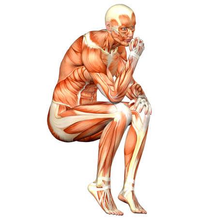 fisiologia: Ilustraci�n de la anatom�a del cuerpo humano masculino aislado en un fondo blanco Foto de archivo