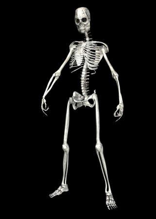 Illustration of a skeleton isolated on a black background Stock Illustration - 12743286