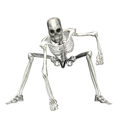 Illustration of a skeleton isolated on a white background