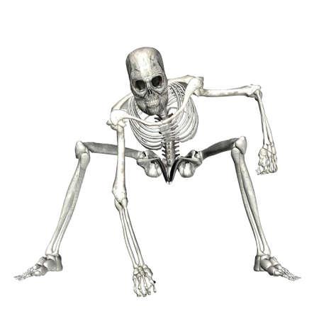 scheletro umano: Illustrazione di uno scheletro isolato su uno sfondo bianco Archivio Fotografico