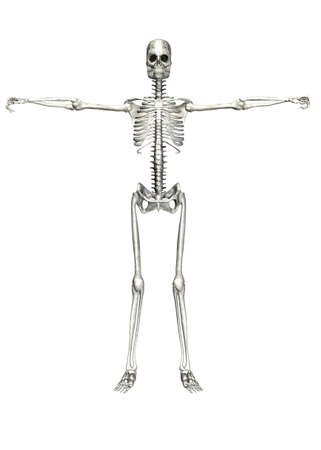 Illustration of a skeleton isolated on a white background Stock Illustration - 12743312