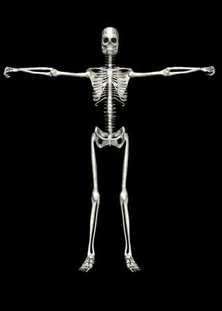 Illustration of a skeleton isolated on a black background Stock Illustration - 12743270