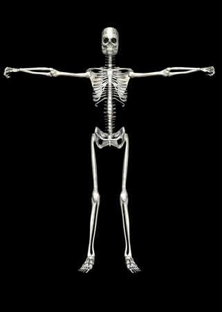 Illustration of a skeleton isolated on a black background Stock Illustration - 12743270