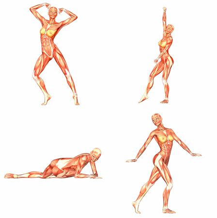 naked female body: Female Human Body Anatomy Pack - 1of5