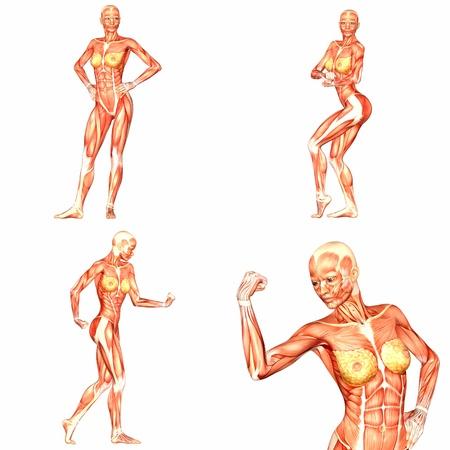 Weiblich Menschlicher Körper Anatomie Pack - 5of5 Lizenzfreie Fotos ...