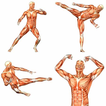 abdominal muscle exercises: Illustration of a pack of four  4  male characters showing the human body anatomy with different poses isolated on a white background - 2of3