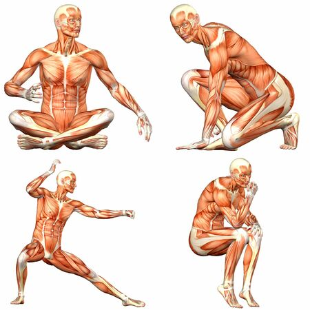 Illustration of a pack of four  4  male characters showing the human body anatomy with different poses isolated on a white background - 3of3 Stock Photo