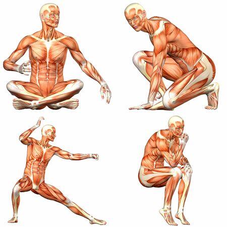 ścięgno: Ilustracja z pakietu czterech 4 znaki mężczyzn pokazujÄ…cych ludzkÄ… anatomiÄ™ ciaÅ'a z różnych pozach na biaÅ'ym tle - 3of3 Zdjęcie Seryjne